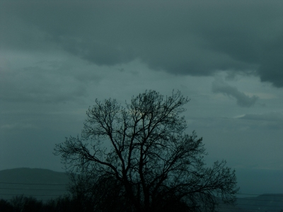 misty-tree-1200