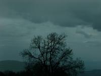 misty-tree-400
