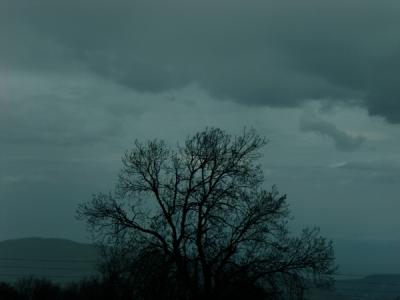 misty-tree-600